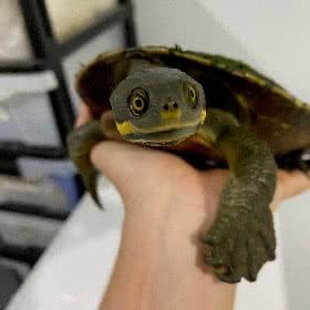 wildlife care turtle